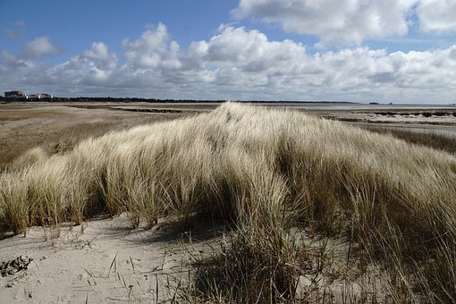 Saint Peter Ording, North Sea, Dune, Dune Grass, Grass