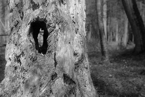 Trunk, Tree, Hollow, Hole, Forest, Environment, Nature