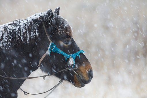 In The Winter, Horse, Snowfall, Patience