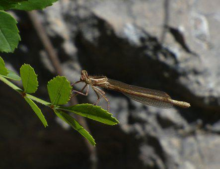 Dragonfly, Winged Insect, Leaves