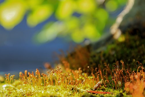 Moss, Macro, Nature, Plant, Colors, Flowering Moss