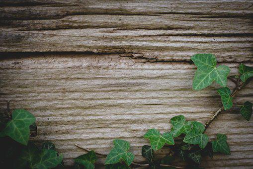Background, Ivy, Wood, Green, Climber, Plant, Nature