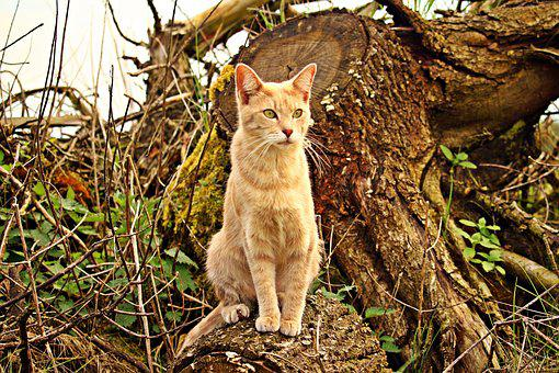 Cat, Kitten, Mieze, Rassekatze, Tree Stump, Forest