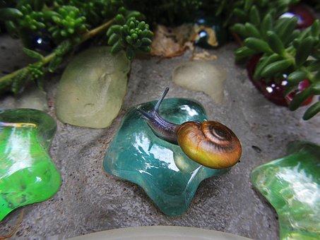 Snail, Garden, Glass, Blue Snail, Salt Lake City, Utah