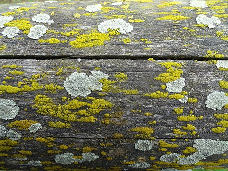 Weave, Wood, Nature, Background, Moss, Fence, Weathered