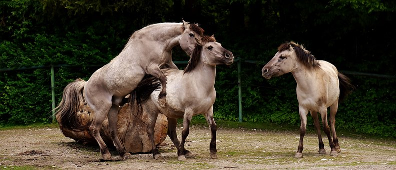 Tarpan, Horses, Animals, Nature, Mold, Animal World