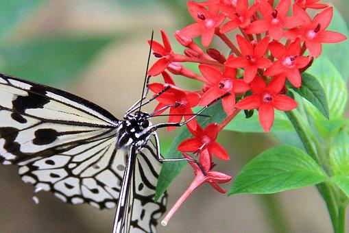 Butterfly, White, Black, Spots Stripes, Quentin Chong