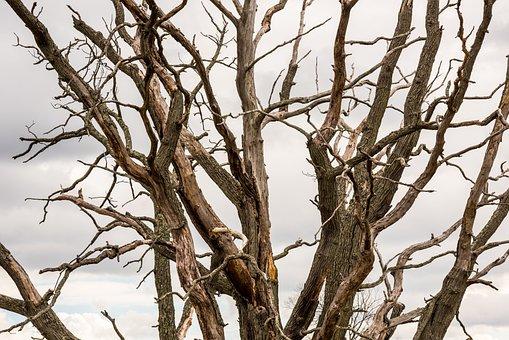 Autumn, Barren, Branch, Branches, Brown, Closeup, Cloud