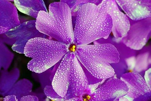 Blue, Flower, Tiny, Five Petals, Geranium, Garden