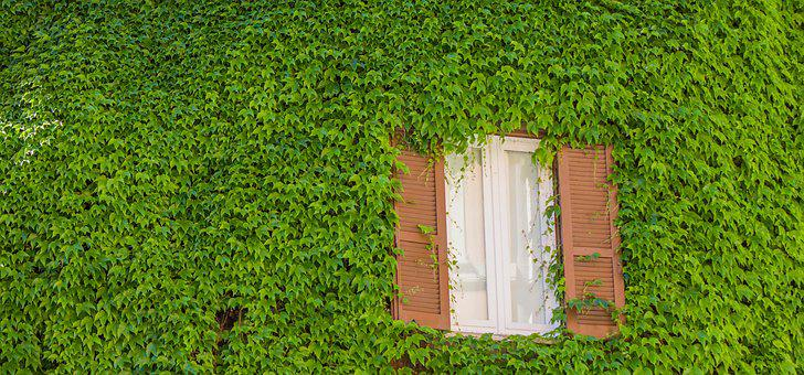 Rome, Window, Green, Plants, Street, Architecture