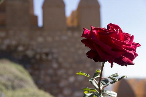 The, Alcazaba, Almeria