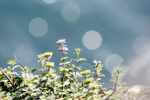 Coastal Plants, Purple, Bokeh, Circular