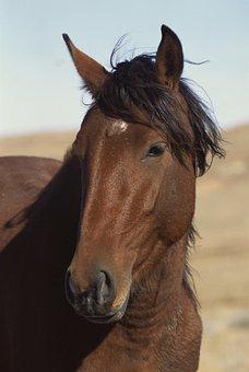 Horse, Male, Cool Gnome
