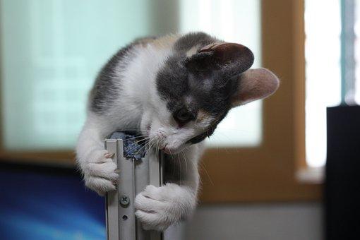 Cat, Nori Just, Nyan Arch