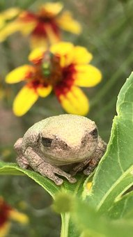 Frog, Toad, Flower, Plant, Green, Yellow, Spring