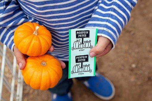 Pumpkin Patch, Pumpkins, Fall, Autumn, Childhood