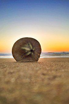 Beach, Sand Dollar, Sunset, Summer, Sand, California