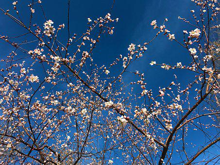 Flower, Sky, Hongluoshi, 2017-01-13-02