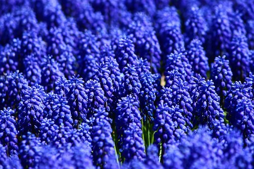 The Flower Of Suffering, Blue Sea, Bulbous Flowers