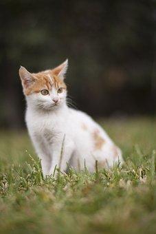 Cat, Animal, White, Animals, Kitten, Cute