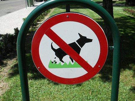 Dogs, Animal Behavior