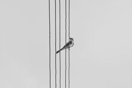 Bird, Nature, Birdie, Interior, Animals, Paige