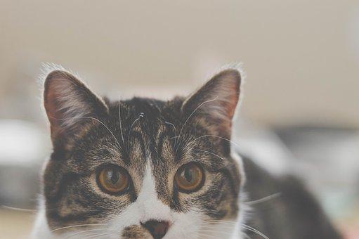 Pet, Animal, Cat, Animals, Dog, Feline, Rest, Friend
