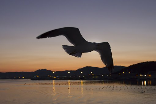 Afterglow, Gulls, Contour, Olbia, Sardinia, Evening Sky