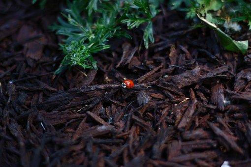 Ladybug, Red, Foliage, Plants, Flora, Bark, Crushed