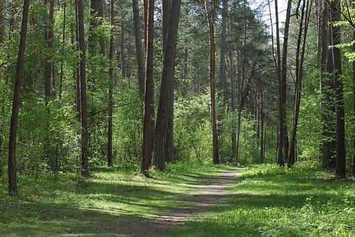 Forest, Trees, Green, Forest Landscape, Green Forest