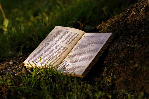 Book, Read, Park, Old, Writing, Gothic, Tree, The Sun