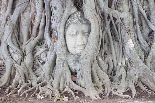 Ayutthaya, Tree, Head Of God, Walk, Elephant, Asia