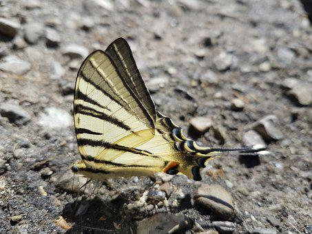 Butterfly, Nature, Road, Colors, Summer, Outdoors