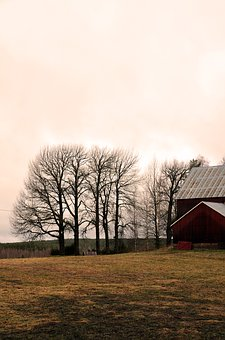 Internal Ultervattnet, Tree, Morning, Barn, Nature
