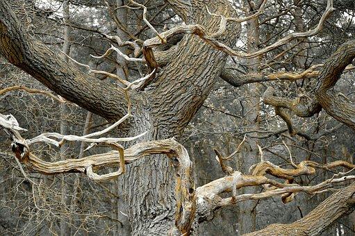 Dead Tree, Grove, Dead Plant, Dead, Aesthetic, Morsch