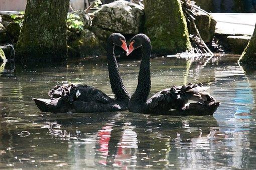 Monogamous, Heart, Good, Life Together, Black, Bird