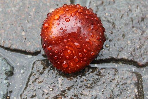 Chestnut, Stones, Autumn, Buckeye, Brown
