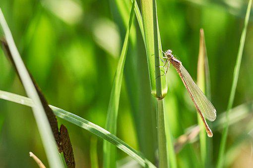 Dragonfly, Blatte, Close Up, Insect, Nature, Green