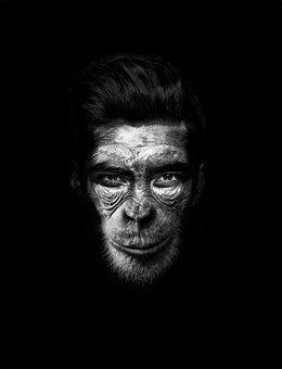 Man, Mono, Hombremono, Chimpanzee, Orang-outang
