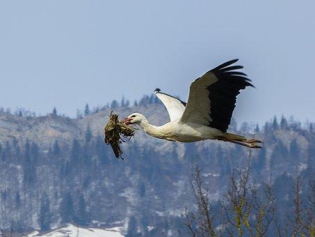 Stork, Nest Building, Nesting Material, Rattle Stork