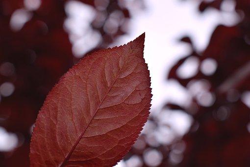 Leaves, Autumn, Mood, Red, Macrophoto, Macro, Nature