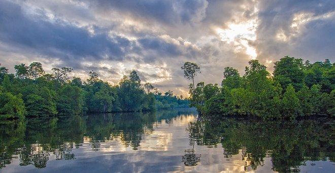 Travel, South Island, Mangrove Forests, Conduit, Asahi