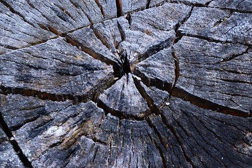 Tree, Macro, Macrophoto, Incision, Fault