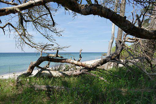 Baltic Sea, West Beach, Fischland-darss, National Park