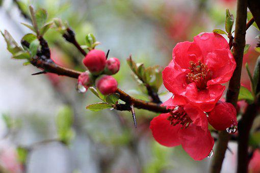 People Who Tree Flower, Flowers, Wood, Plants, March