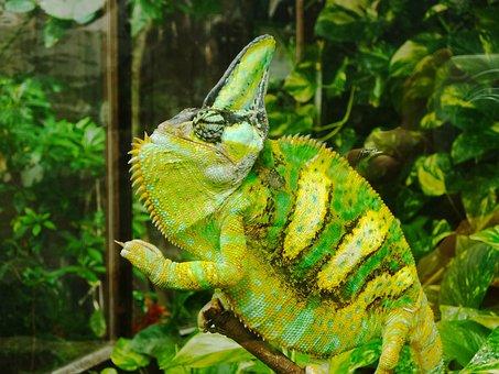 Proud, Green, Yellow, Chameleon, Flower, Nature, Summer