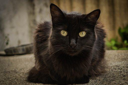 Cat, Pet, A, Animal, Domestic, Cute, Kitten, White