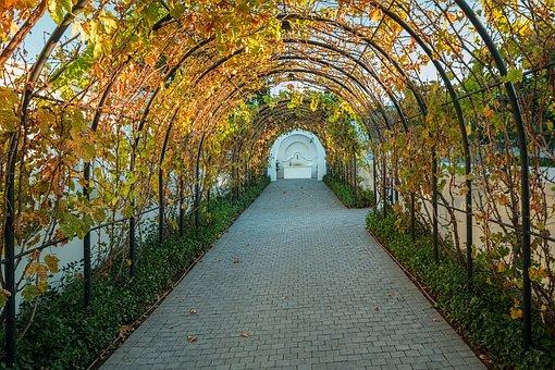 Vineyard, Vines, Grapes, Archway, Tunnel, Harvest