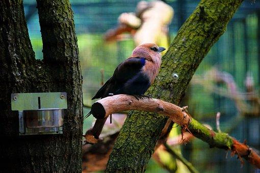 Bird, Aviary, Cage, Zoo, Plumage, Branch, Captivity