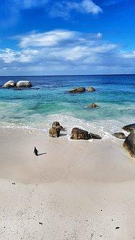 Beach, Sea, Penguin, South Africa, Cape Town
